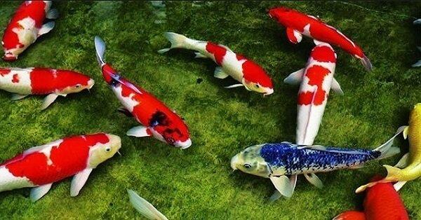 Giấc mơ thấy cá thường sẽ gắn liền với điềm báo về những chuyện sắp xảy ra trong thời gian tới